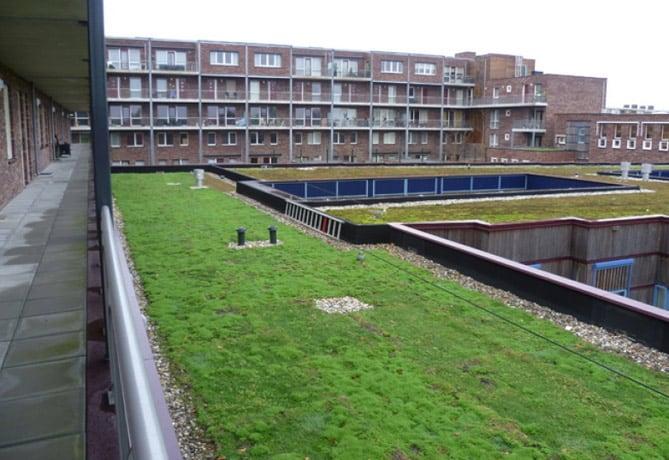 groen-dak-gemeente-Arnhem