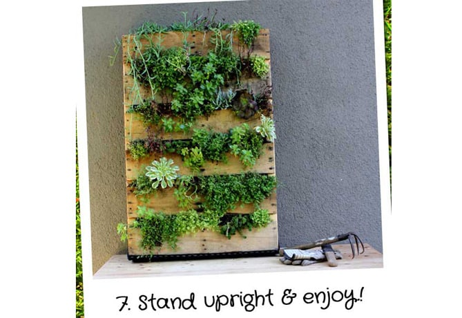 DIY-Vertical-Garden-Wall