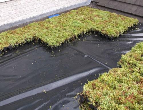 Waarom groen dak of groene gevel?