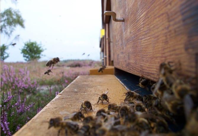 bijenstal-De-Gelderlander