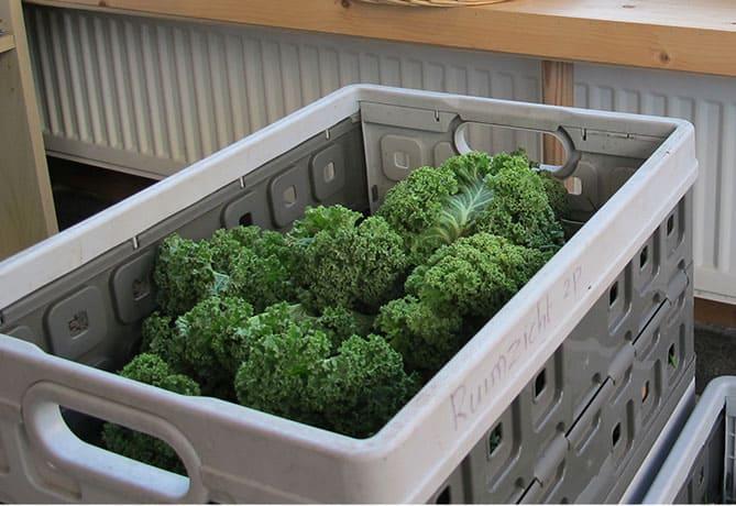 De Groene Vos-groentenpakket Ruimzicht