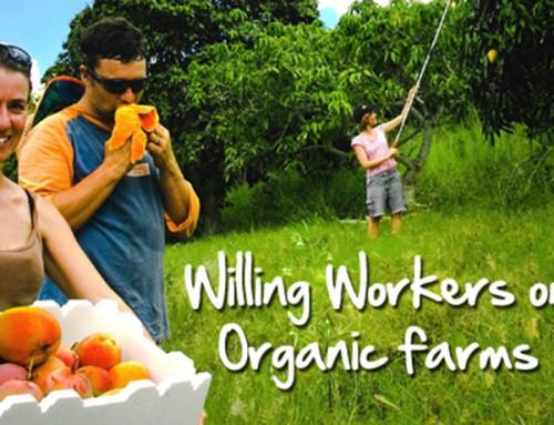 Doe-vakantie op een biologische boerderij