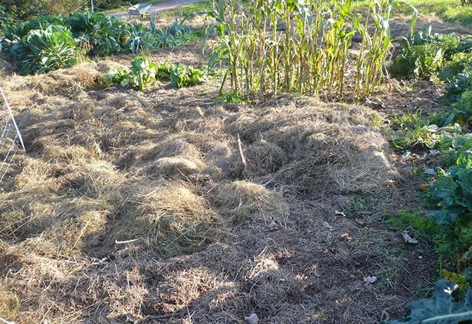 mulch-op-de-bodem