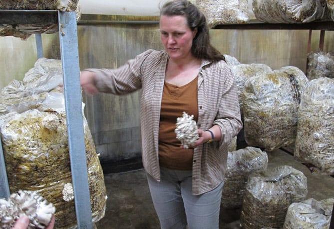 De-Middelwaard-biologische-oesterzwammen