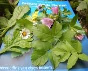 Marion-de-Kort-boek-met-eetbare planten