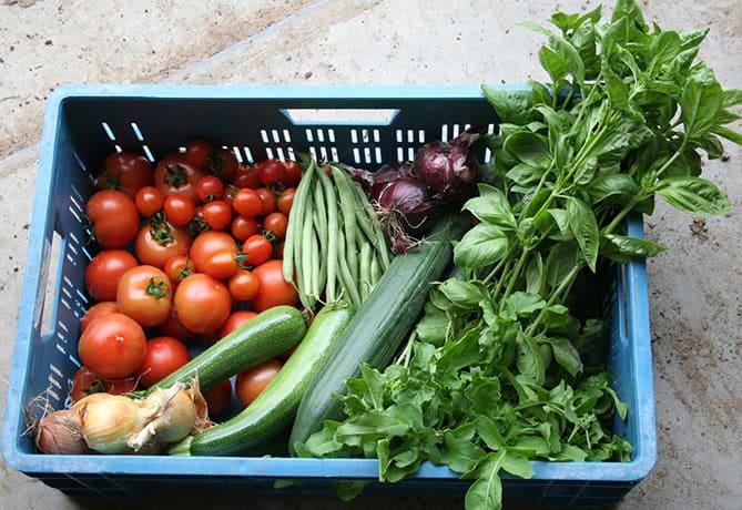 groentepakketten-BioBoeren-Achterhoek-Klein-Broekhuizen-04