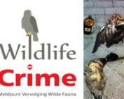 wildlife-crime-petitie