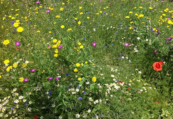Bloementuin pan tuinen bloei in arnhem for Www bloem en tuin nl