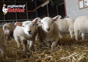 zorgboerderij-Tokhok-Arnhem