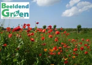 Beeldend-Groen Hovenier voor natuurlijke tuin