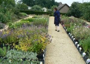 Bloemen-in-de-tuin-kwekerij-bezoek