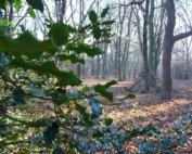 Waterberg-IVN wandeling