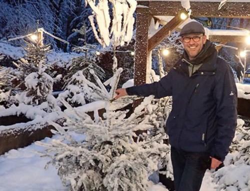 Biologische kerstboom