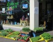 biologische moestuinplantjes-De-Groene-Vos