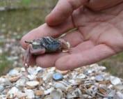 vogeltje-met-gebroken-pootjes door kalkgebrek door intensieve landbouw