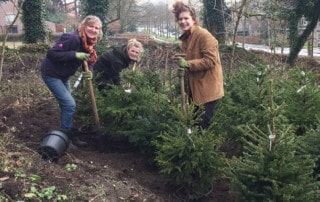 adoptie kerstbomen Kweekland
