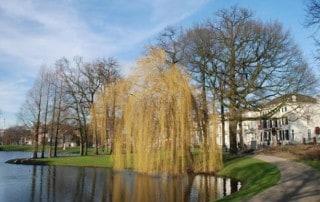 bomen-lauwersgracht