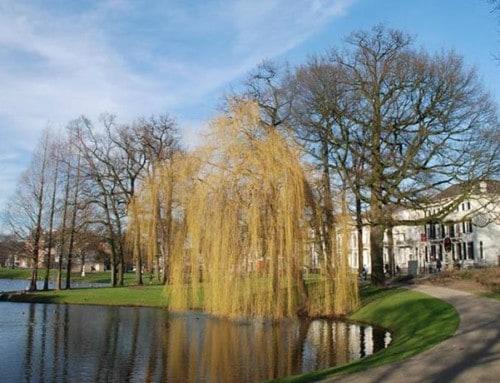 Bomenkap Lauwersgracht