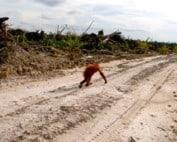 stop-banken-omgehakt-regenwoud
