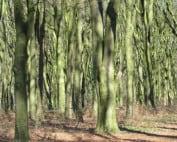 stadsgesprek bomen-over-bomen