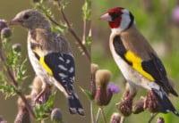 putter-tuinvogelcursus-vogelbescherming