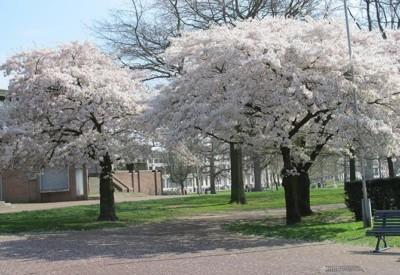 bomen-over-bomen-vervolg Arnhem