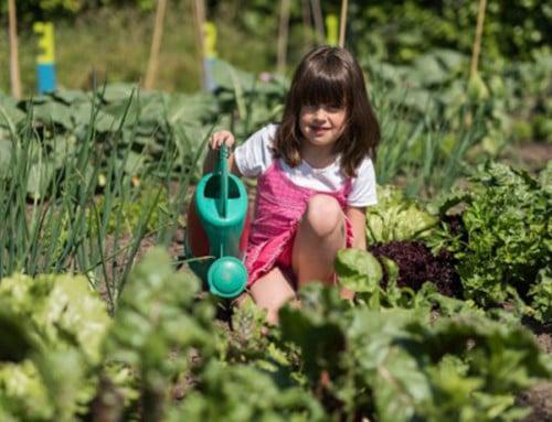 Wil jij leren je eigen groente te verbouwen?