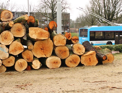 Goed nieuws over biomassa!
