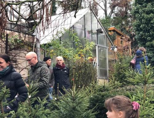 Biologische adoptie kerstbomen