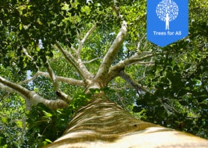 trees-for-all-Bomen planten en CO2 compenseren