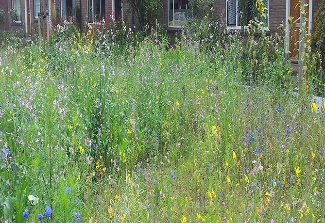 levend-archief-bijvriendelijke-tuin