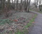 stop-bomenkap-Elderveld