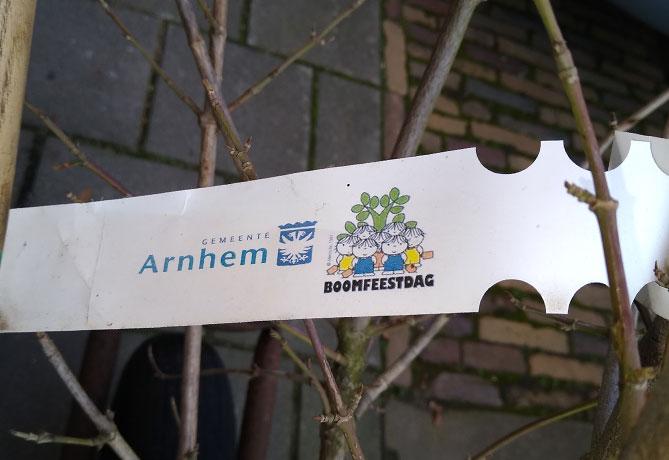 gratis-boom-gemeente-Arnhem