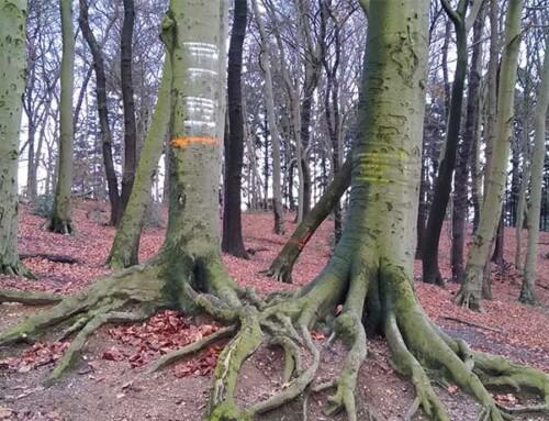 Bomen dunnen in het park onnodig en ongewenst