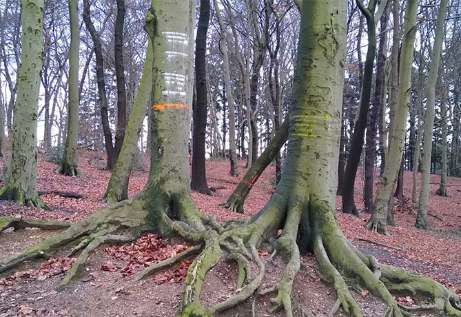 park-klarenbeek-dunnen