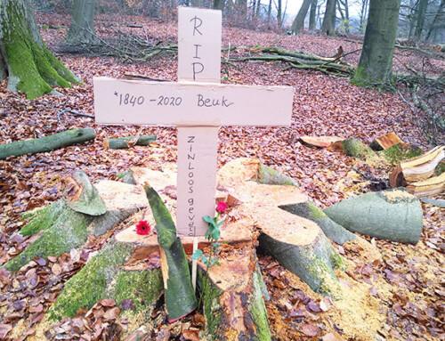 Stop massale bomenkap in Arnhemse parken