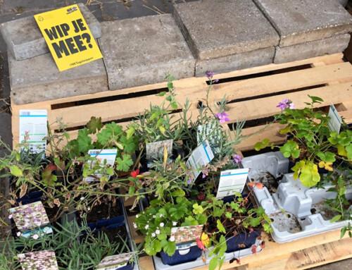 Gratis planten bij de stadsboerderijen